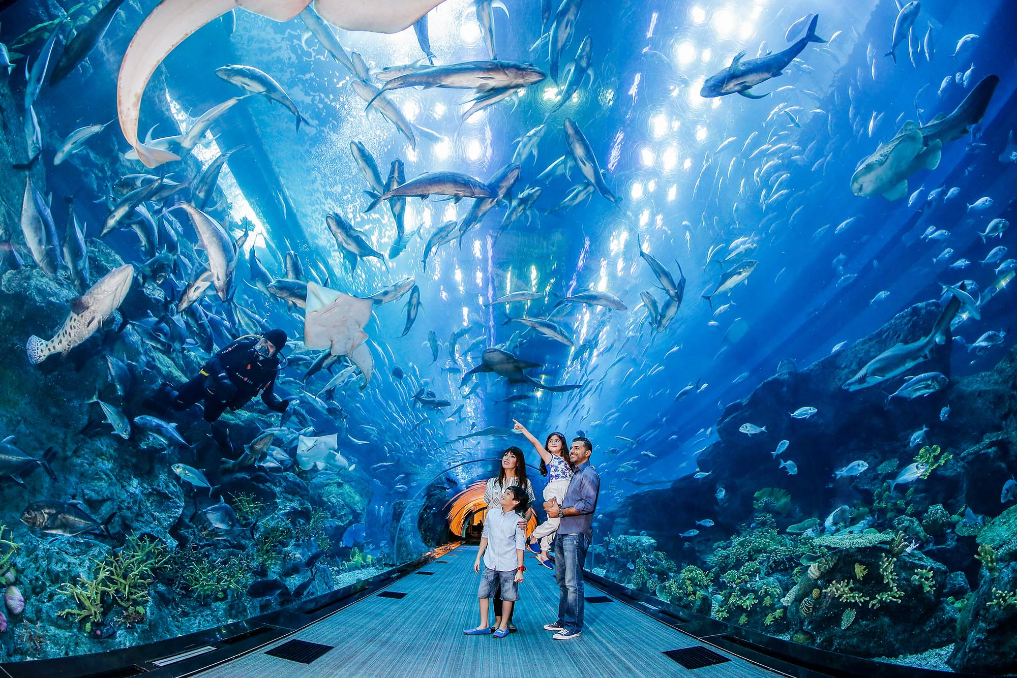 Image result for Dubai Aquarium & Underwater Zoo