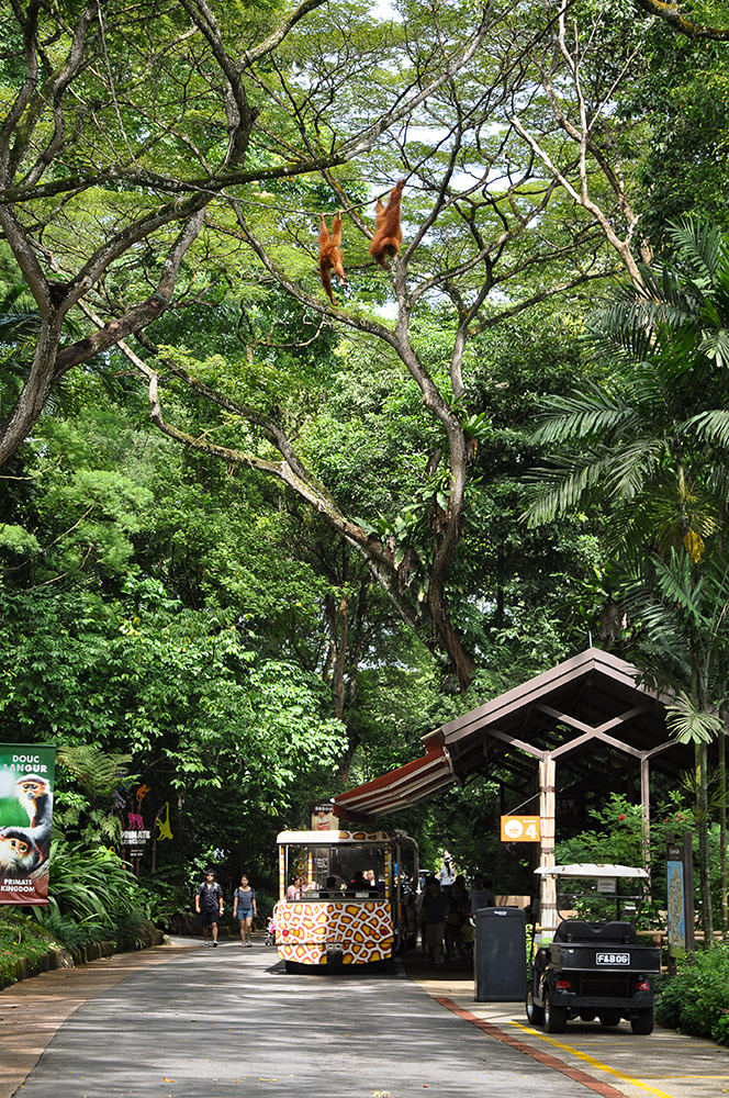 Singapore Zoo l iVenture Card Singapore